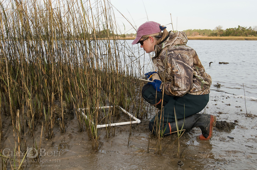 U.S. House of Representatives Member, Anne Peterson Hutto learns about Oyster Reef Restoration techniques such as GPS mapping and measuring spartina densities.