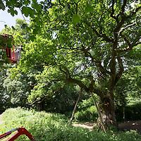 Birnam Oak Tree Preservation Works