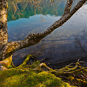 Mosses dominate the forground of reflections in Lake Crescent in Olympic National Park.
