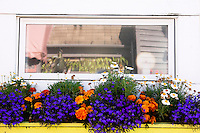 Flowers in Front of Houseboat Window at Fisherman's Wharf, Victoria, B.C.