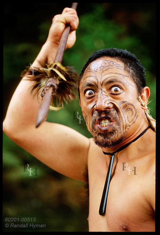 Traditional Maori performer grimaces as he threatens with spear at Waimangu Volcanic Valley; Rotorua, New Zealand.