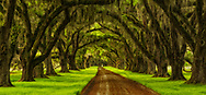 long view down Oak Alley of Tomotley Plantation in South Carolina