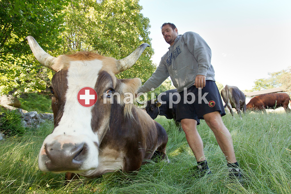 "SC Bern icehockey defender Andreas HAENNI of Switzerland is pictured with his cow ""Lehta"" on a glade near Pie Moretti in Monte Carasso, Switzerland, Monday, June 20, 2011. (Photo by Patrick B. Kraemer / MAGICPBK)"