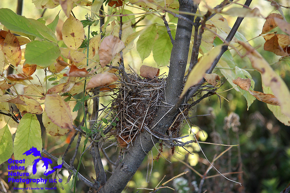 The avian occupants of this nest at Fonferek's Glen have moved on. Should this little nest survive the harsh Wisconsin winter, it may very well be reused in the spring of 2010.