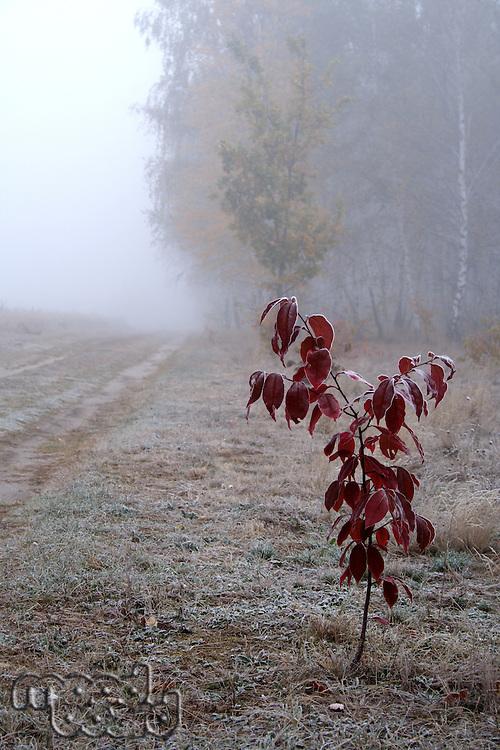 Frozen plant on meadow - foggy weather