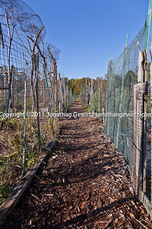 An unpaved walking path between the plots of a community garden. WATERMARKS WILL NOT APPEAR ON PRINTS OR LICENSED IMAGES.