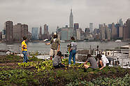 Rooftop farms in New York NY601A