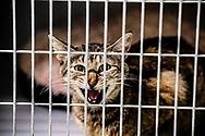 ROTTERDAM - een poes kat in aan dierenasiel voor de zomer vakantie , opvang , verzorging , ROBIN UTRECHT