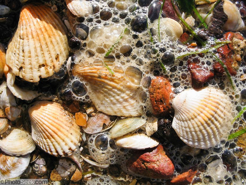 Surf washes over sea shells on a beach of Phillip Island, Victoria, Australia.