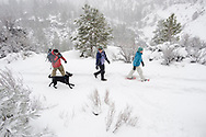 High angle side view of three adults and one dog walking on a trail in the snow in Bend, Oregon. (releasecode: jk_mr1036, jk_mr1032, jk_mr1031) (Model Released)