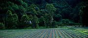 HWY 194's Rural landscape in Valle Crucis, NC.