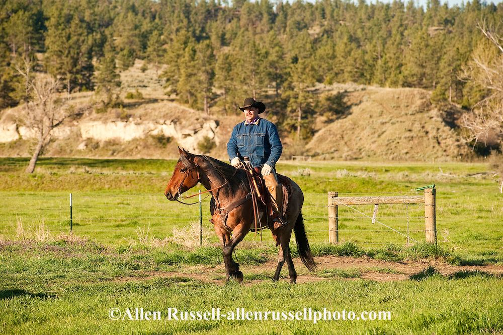 Cowboy, red roan quarter horse, eastern Montana, MODEL RELEASED, PROPERTY RELEASED