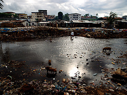 Pigs, garbage and people in the river in Kroo Bay slum, which is really a drain of the cities sewage. ..Kroo Bay, Freetown, Sierra Leone.