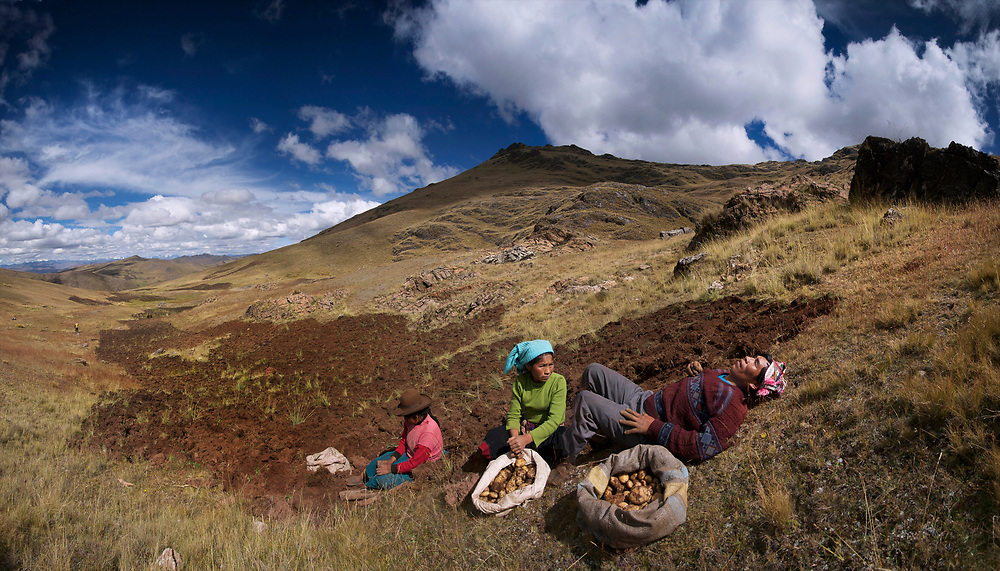 Harvesting potatoes in the Andes commuity of Pampallacta at the Potato Park near Pisac, Peru. Hundreds of varieties of potatoes are grown in high mountain fields on a seven year rotation.  These fields belong to Mariano Sutta Apucusi, who is a technician at the park and a varayoc, a traditional spiritual &quot;mayor&quot; of the community.  Someone who has a lot of knowledge about the rituals and maintains these rituals in their home. In their family field in Pampallacta at 14,000 feet altitude.  It is an hour trip each way to the fields.  The horses are loaded with bags of potatoes that take two strong men to load.<br /> <br /> Mariano Sutta Apucusi is wearing the traditional hat and a dark red sweater. Sabina Sutta Apucusi is his sister, wearing a brown hat and a light red sweater.<br /> <br /> Mariano Sutta Apucusi is wearing the traditional hat and a dark red sweater. Sabina Sutta Apucusi is his sister, wearing a brown hat and a light red sweater.<br /> <br /> The Parque de la Papa, or potato park, near Pisac, Peru is using potatoes as a focal point to aid biodiversity and local economics, as well as bringing the community together through traditional values.