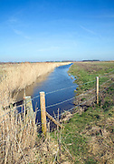 Reeds and drainage ditch drained marshland Hollesley, Suffolk