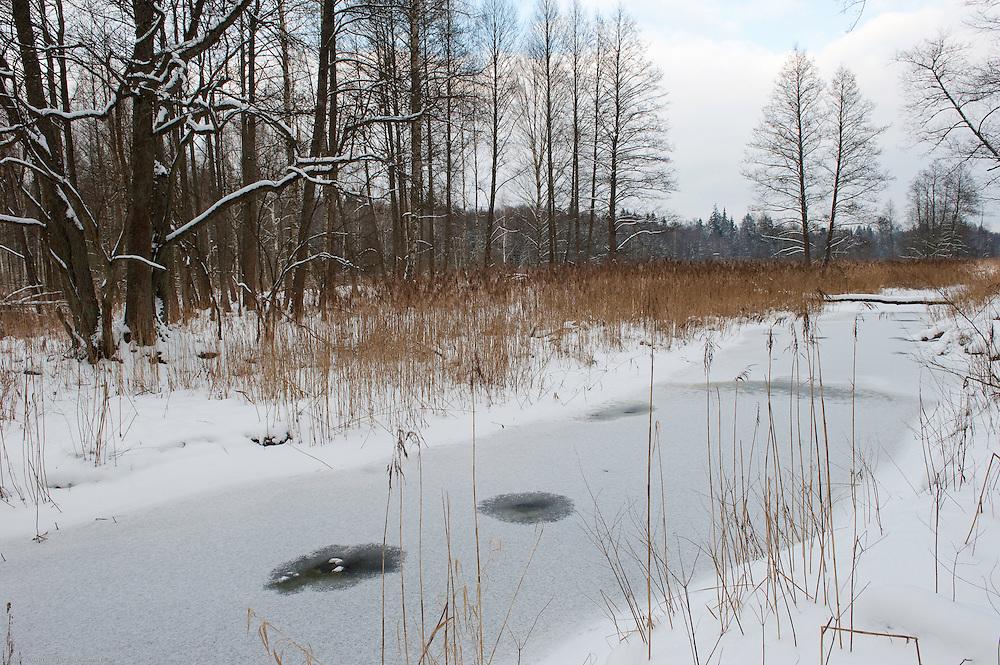 Bialowieza, Poland. February 2009
