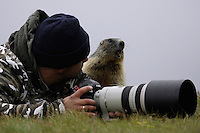 Photographer with Alpine Marmot (Marmota marmota) (model release 03/08/HTNP), Hohe Tauern National Park, Carinthia, Austria
