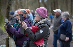 © Licensed to London News Pictures. 19/02/2017. Welford, UK.  Visitors take photographs of the snowdrops in the woods at Welford Park near Newbury. Welford Park, where The Great British Bake Off is filmed every summer, is only open for visitors for five weeks in the year - until March 5th. Warmer temperatures are expected in the UK over the next few days after the recent cold spell.  Photo credit: Peter Macdiarmid/LNP
