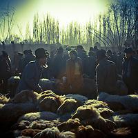 Uyghur man take sheep for sale at a livestock market  on February 24, 2012 in Turpan County, in the far western Xinjiang province, China. (Photo by Bernardo De Niz)