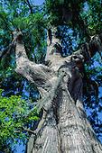 TREES FINE ART