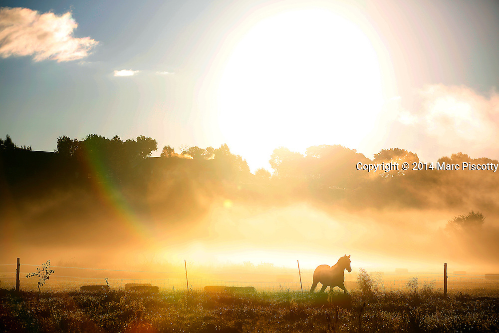 SHOT 10/2/14 7:39:48 AM - A horse gallops thru a pasture as early morning fog lifts on a ranch outside of Montrose, Co. The area in southern Colorado is known for ranching and farming. (Photo by Marc Piscotty / © 2014)