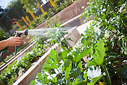 Watering Backyard Garden with Hose