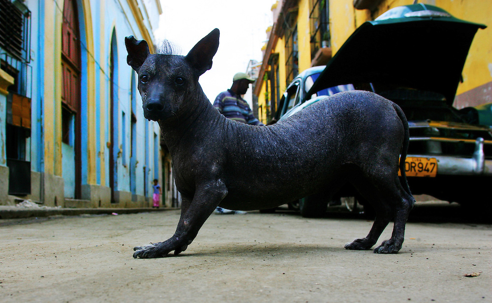 Street scene, Old Havana, Cuba.<br />