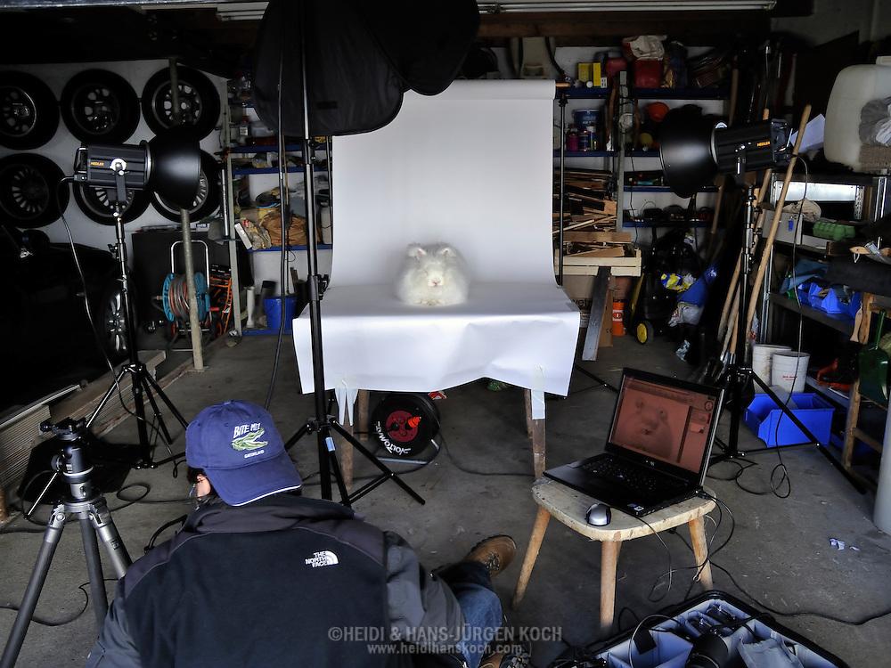 """Photographer Hans-Jürgen Koch with an Angora rabbit in a garage, on assignment for the photoproject """"Creature's Coiffure""""; Fotograf Hans-Jürgen Koch mit Angorakaninchen in einer Garage, on Assignment für Fotoprojekt """"Die Frisur der Kreatur"""""""