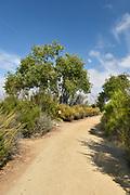 San Joaquin Marsh Reserve Hiking Trail