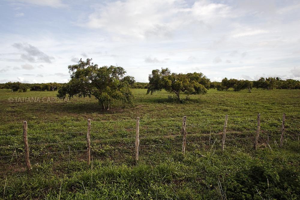 Árvores de mangaba, cercadas por proprietários, nos arredores de Barra dos Coqueiros..© Tatiana Cardeal