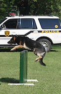 Middletown, NY - A police dog jumps over an obstacle during a demonstration at the YMCA on June 1, 2008.