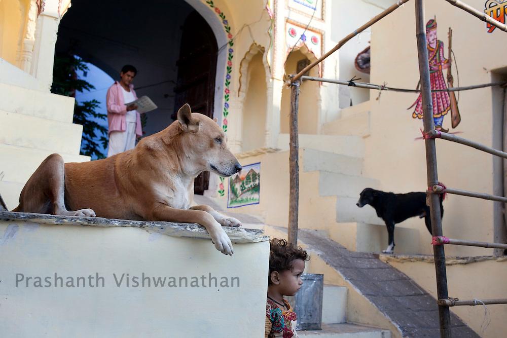 A man picks up his morning newspaper n Pushkar, India, November 6, 2011.  Photographer: Prashanth Vishwanathan