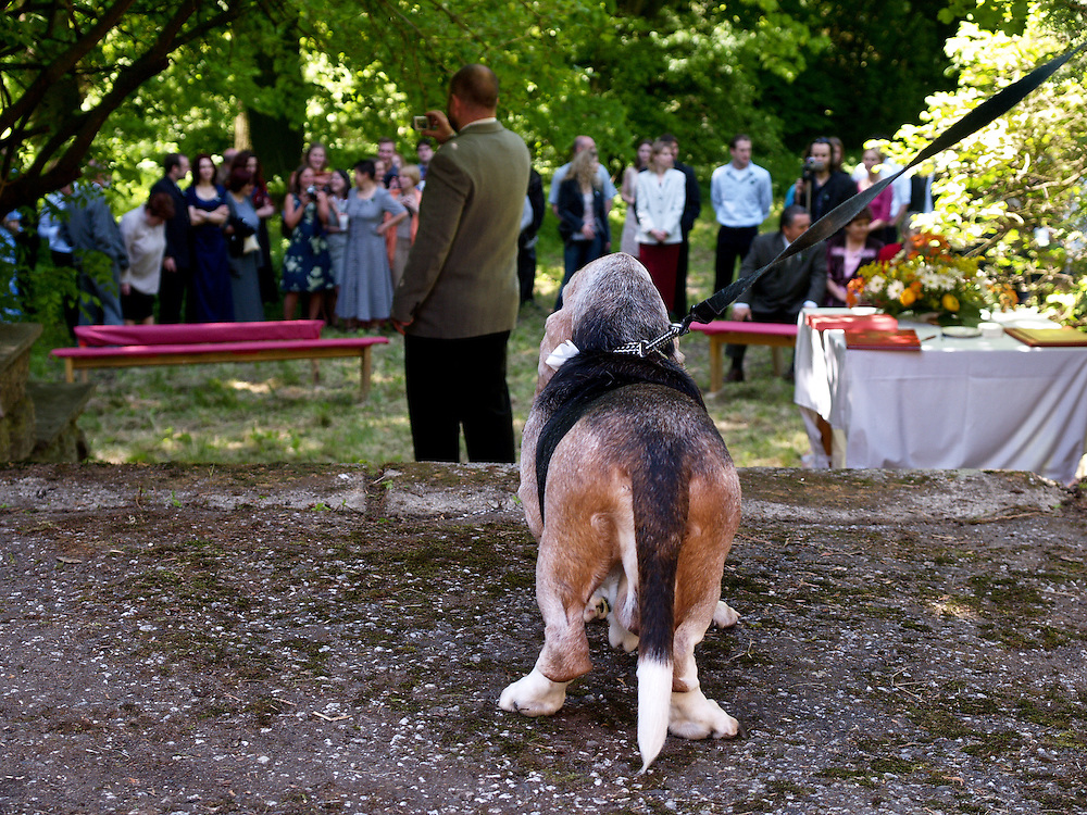 Dog attending a wedding ceremony in Czech Republic.