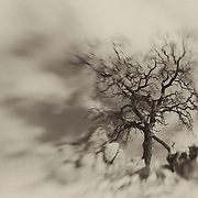 Desert Oak Large Rock Hill- Lensbaby - Sepia Black & White