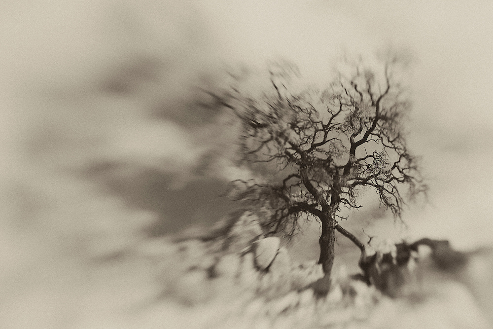 Desert Oak Large Rock Hill- Lensbaby - Sepia Black & White