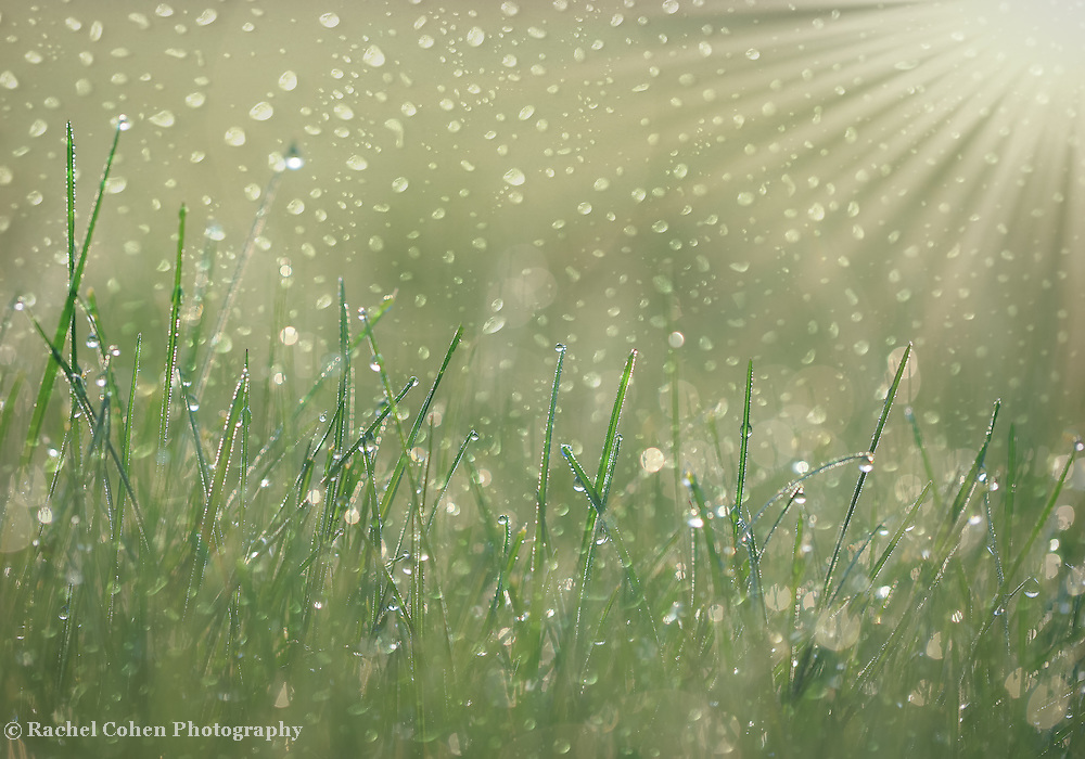 &quot;Rain Dance&quot; <br /> <br /> Gorgeous dewdrops on blades of grass in the morning sunlight with a touch of extra magic!