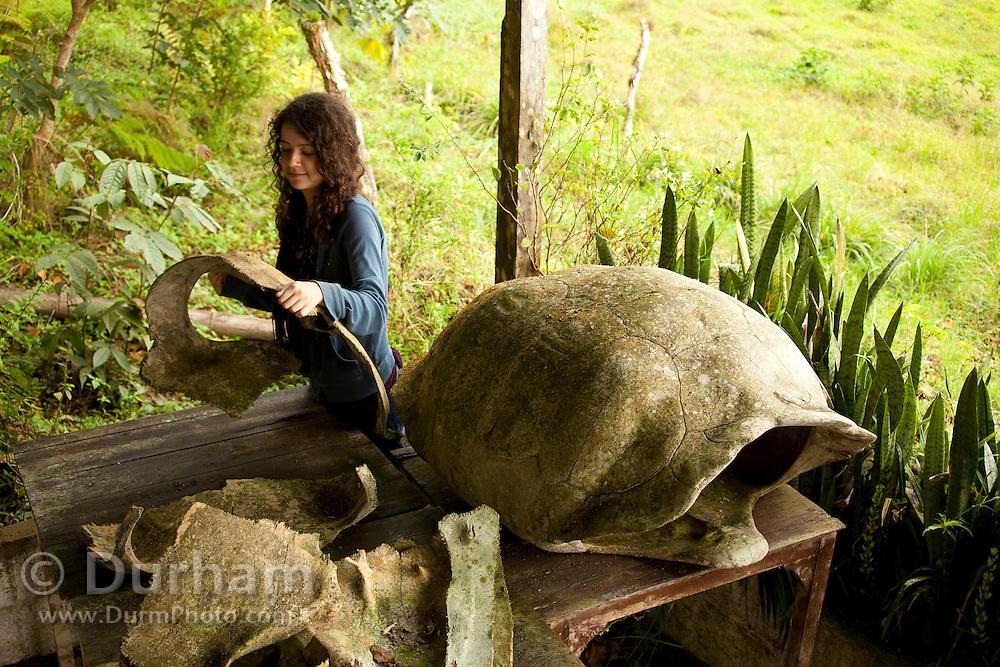 14 year old Isabel Durham examines the remains of giant galapagos tortoise (Geochelone elephantopus) shells in the highlands of Santa Cruz Island, Galapagos Archipelago - Ecuador.
