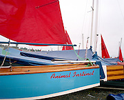 Animal Instinct,' a small racing boat in Monkstown, ireland, near the local Pfizer factory that manufactures Viagra....
