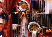© Licensed to London News Pictures. 19/11/2011, Birmingham, UK.  Mr Tigga waits in his cage before entering the non pedigree category. The Supreme Cat Show held today, 19 November in the National Exhibition Centre, Birmingham.  The event is a highlight in the cat show calendar and is regarded as the feline equivalent of Crufts. Photo credit : Stephen Simpson/LNP