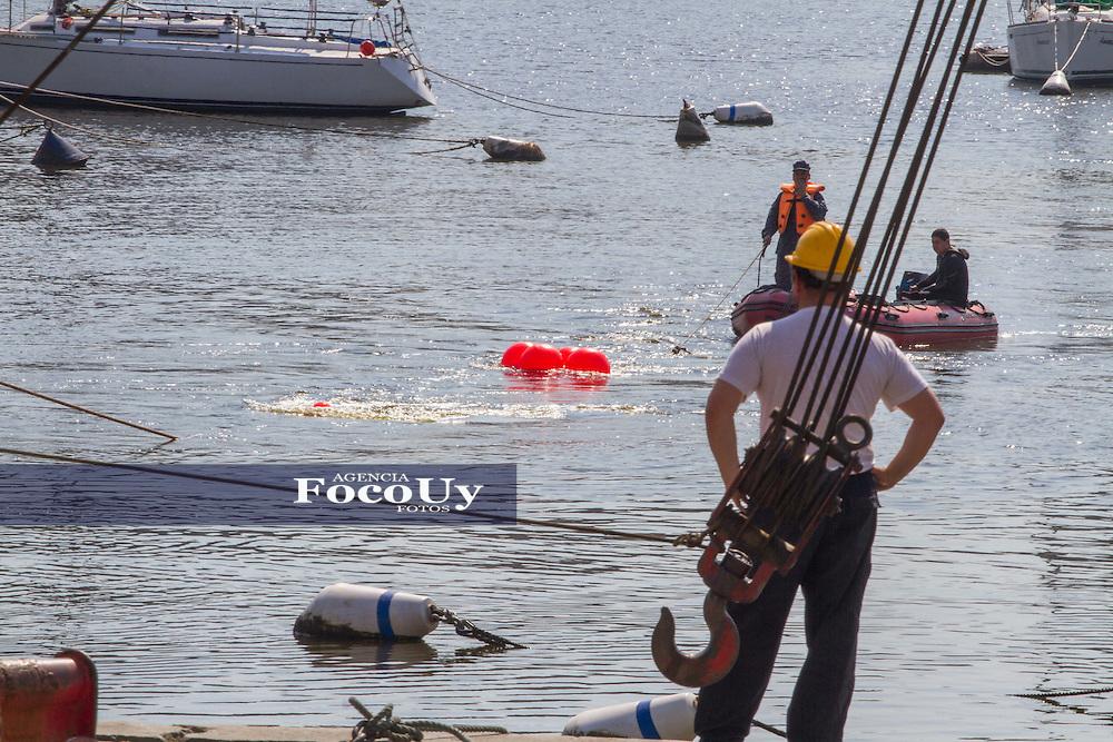 Montevideo, Uruguay, 26 de Agosto 2016. Puerto del Buceo. Sacaron del agua a ballena que vino a morir a las costas y fue transportada al vertedero de la IM Usina 5 .<br /> Foto, Gaston Britos / Focouy