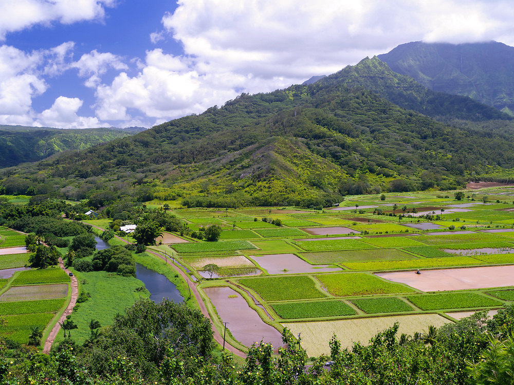 View of taro paddies in the Hanalei Valley, near Princeville, Kauai, Hawaii, US.