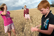 12 year old Pippa Reilly, 15 year old Holly Reilly and 10 year old James Reilly on their family's wheat field (paddock), Wyalkatchem, Western Australian Wheatbelt. 09 December 2012 - Photograph by David Dare Parker