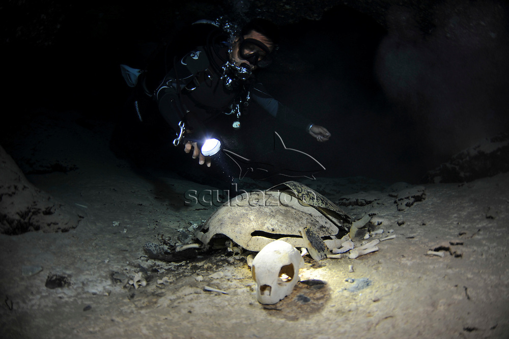 A diver inside a dark cave, shining a toch on a dead Green Turtle skeleton, Chelonia mydas, Sipadan Island, Sabah, Malaysia.