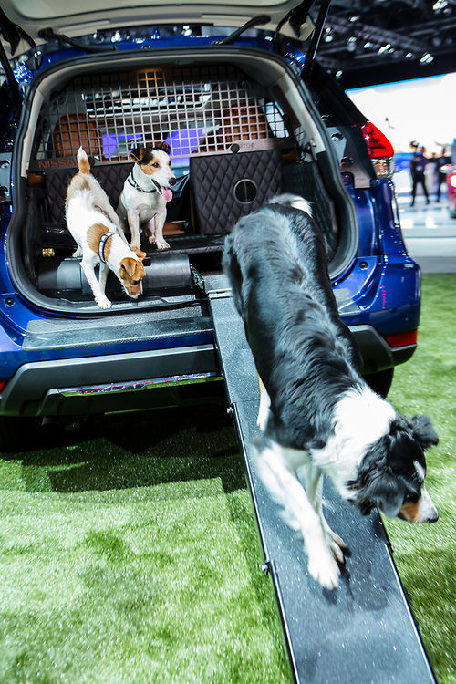 New York, NY - 12 April 2017. Nissan's Rogue Dogue concept SUV, designed to be dog-friendly. The ramp folds in and tucks away, and the car includes water for dog washing, a dryer for dog drying, and other amenities. It's unlikely the car will be produced, but the after-market may step up to the challenge.