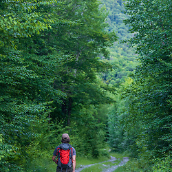 A man walks on a woods road on Big Spruce Mountain in Arlington, Vermont.