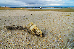 "EXCLUSIVE: SHOCKING IMAGES OF CAPE TOWN'S BONE-DRY DAM WHERE ONCE LOCALS USED TO GO BOATING AND WATER SKIING WITH PIX By Magnus News Agency Shocking images show a bone-dry desert where once boats used to sail on a reservoir as drought continues to ravage South Africa. Theewaterskloof Dam once hosted yacht clubs and water skiing but today not even one vessel could be launched on the parched space. Photographer Dirk Theron visited the starved body of water last week and took these frightening images of the dried-up lake which should supply 40 percent of the water to Cape Town's four million residents. As Dirk's pictures show, skeletons of fish and muddy pools are much of what remains of the former 480 million cubic metre capacity site. Last week billionaire former New York Mayor Michael Bloomberg toured Theewaterskloof as part of his role as UN special Envoy for Climate Action. He warned the reservoir and draught across the Western Cape should act as a wake-up call for the international community on climate change. Despite the drought, which has struck the area for the past few years, government officials in South Africa have been criticised for their handling of the crisis. A 'Day Zero' when municipal taps would be turned off has been pushed back from June 4 to July 9 despite chronic shortages continuing. South African Dirk lives just 30 minutes from Theewaterskloof, but said he was stunned by what he found there. He said: ""Theewaterskloof dam is one of those places where everybody has a boat and people would go there for the weekend. ""A friend of mine used to be a member of the Theewaters sports club, we used to go there all the time water skiing and playing on the water in his boat. ""This was a massive, massive body of water. It's been a few years since last I've been there but when I saw it I was shocked to my core. ""We all know about the water crisis but standing there and seeing it with your own eyes is so surreal. ""I stood on dry ground"