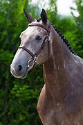 Cristallo<br /> Future Sport Horse Sales 2017<br /> © DigiShots