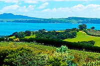 View from Mudbrick Vineyard, Oneroa, Waiheke Island, Hauraki Gulf, near Auckland, New Zealand