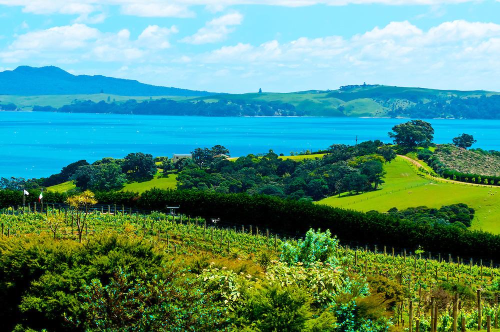View from Mudbrick Vineyard, Oneroa, Waiheke Island, Hauraki Gulf, near Auckland, New Zealand