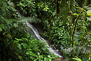Waterfall in the Mindo Nambillo Cloud Forest Reserve.